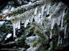 A crisp cold wind blows Dancing from limb to limb Winter's curtain call  multifacetedmatron©2014