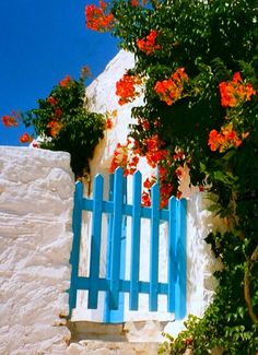 Wooden gate and red hibiscus flowers.. Chora, Iraklia Island (Small Cyclades)…