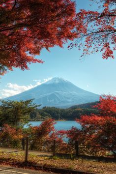 Mt Fuji, Japan in Autumn | Lukas Bischoff