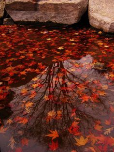 Autumn Stars  #leaves #reflection #water #fall