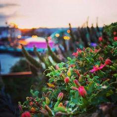 Flowers by the Boardwalk♥