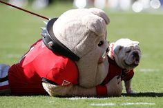 Hairy Dawg shares a hug with fellow Georgia Bulldogs mascot Uga VII.