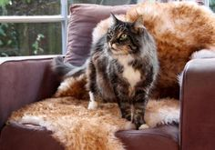 Made from 100% natural genuine sheepskin wool on the natural leather backing. Sheepskin pet beds are perfect for creating a special spot for the furry or hairy member of your family. This helps to protect your furniture and might even keep the cat off the bed! Place this pet bed rug next to the fire, in a basket, in a special chair, in a pet crate, on the floor, on top of the sofa, on an ottoman or at the foot of your bed - anywhere you want! Natural Shapes, Natural Rug, Pet Beds, Dog Bed, Bed Rug, Sheepskin Rug, Large Animals, Gifts For Pet Lovers, Natural Leather
