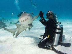 funny shark week high five