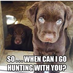 My future pup!