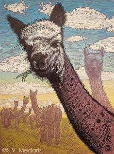 S.V. Medaris - full-color reduction linocut features head and neck of bicolor alpaca. More alpacas in distance, bright blue sky with puffy clouds