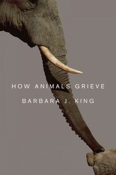 Grief is not uniquely human: How Animals Grieve