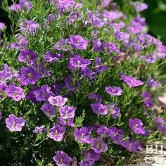 These Are the Best Annuals for Fragrant Flowers Best of the Best: Award-Winning Annual Flowers Garden Plants Vegetable, Shade Garden Plants, Purple Plants, Tomato Garden, Fruit Garden, Tropical Garden, Flowers Garden, House Plants, Shade Flowers