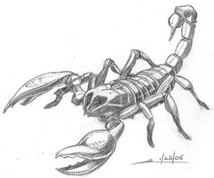 John-Scorpion.jpg (510×424)