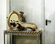 """skeletons in the closet"""" by photographer Klaus Pichler behind the scenes of the museum natural history Vienna"""