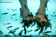 massage kista smile fish spa