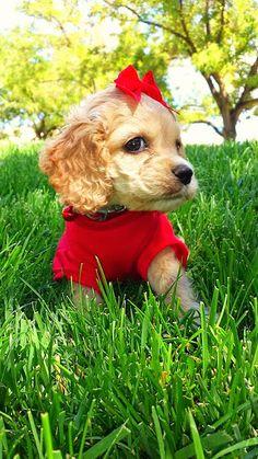 ஜ۩۞۩ஜ Azulestrellla ஜ۩۞۩ஜ: ► Imágenes de perros encantadores ◄