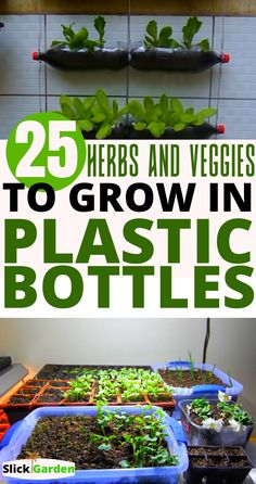 There is a lot of information about growing food in plastic bottles. Using these plastic bottles to grow food for your family is not bad, provided you Growing Vegetables In Containers, Home Grown Vegetables, Container Gardening Vegetables, Planting Vegetables, Veggies, Growing Herbs, Growing Flowers, Planting Flowers, Home Vegetable Garden