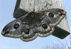 La farfalla - le farfalle