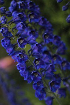 Summer Gardening: Plant these Hummingbird Attracting Flowers. #summer #gardening #flowers #ideas