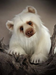 Hudson by Kat Michalski - Bear Pile My Teddy Bear, Cute Teddy Bears, Polar Bear, Plush Animals, Felt Animals, Cute Animals, Stuffed Animals, Love Bears All Things, Charlie Bears