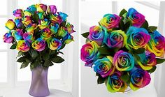 Just $10: Rainbow Rose Kit - Grow Your Own Magical Bouquet! ($40 Value)