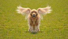 Symmetry Dog