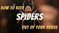 How to Keep Spiders Out of Your House - The Guardians Choice Mosquito Trap, Rifle Scope, Spiders, Essentials, Amazing, House, Spider, Haus, Home