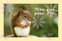 ecureuil-fleur.jpg