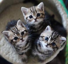 【可愛い子猫さん】 抱きしめたくなるくらいかわいい 猫画像22選☆ 読んでみる ↓ ↓ ↓
