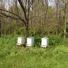 One of our bee yards, before we mowed & cleaned up.