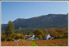 Wine Routes in South Africa