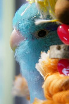 Mozart's closeup on his Natural Swing. So cute! Submitted by Ce Kerschlibowski Bird Toys, Natural, Cute, Photos, Animals, Pictures, Animais, Animales, Animaux