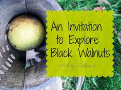 A Life Sustained: An Invitation to Explore Black Walnuts (Plus 20 Ways to Extend Learning)