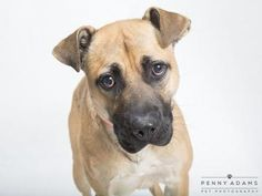 Check out Blake's profile on AllPaws.com and help him get adopted! Blake is an adorable Dog that needs a new home. https://www.allpaws.com/adopt-a-dog/labrador-retriever/5389131?social_ref=pinterest