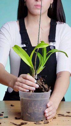 Deseja aprender a cultivar orquídeas? Clique em visitar neste pin e confira. Indoor Orchids, Orchids Garden, Succulents Garden, Garden Plants, Planting Flowers, Orchid Flower Arrangements, Orchid Planters, Orchid Plant Care, Orquideas Cymbidium