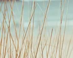 beach grasses photography abstract nautical decor 8x10 8x12 ocean photography fine art beach grass mint pastel wall art coastal decor dunes on Etsy, $25.00