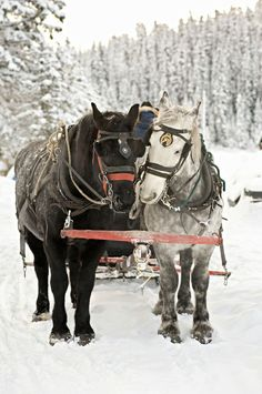 A Winter Sleigh Ride with Horses / Come join me on (Believe in the Magic of Christmas on Facebook & Pinterest) I plan to Surprise & Delight you this Holiday Season!  XOX Jody