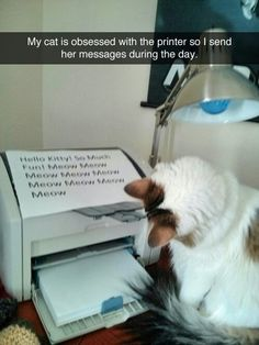 Kitty obsessed with printer