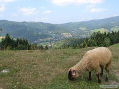 Wisła - obiekty noclegowe rekomendowane przez Turystów: http://www.nocowanie.pl/turysci-rekomenduja---najlepsze-noclegi-w-wisle.html #Wisła #accommodation #góry #noclgi #Poland #mountains