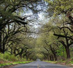 Mississippi's Tunnel Of Trees Is Absolutely Incredible - This tree tunnel can be found on a country road, just off of Interstate 20 between Edwards and Bolton, Mississippi.