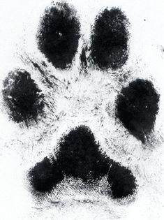 Dog paw print tattoo I would get it on the back of my ankle Dog Tattoos, Body Art Tattoos, Print Tattoos, Tatoos, Dog Best Friend, Geniale Tattoos, Cat Paws, Trendy Tattoos, Get A Tattoo