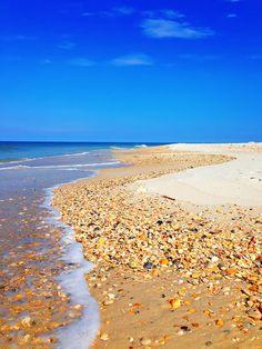 cape-san-blas-florida-pet-friendly-beach-vacation-2013-21   Kevin & Amanda