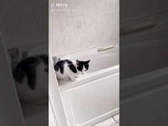 KITTENS - YouTube Kittens, Action, Youtube, Cute Kittens, Group Action, Kitty Cats, Baby Cats, Youtubers, Baby Kittens