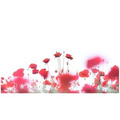 / Stopped flow  #花をながめて #昭和記念公園 #ポピー #シャーレーポピー #東京カメラ部 #花 #花の写真館 #ファインダー越しの私の世界 #はなまっぷ #IGersJP #team_jp_ #team_jp_flower #photooftheday #poppy #flowerstagram #500px #kf_gallery #loves_japan #flower #flowers #dreamyphoto #tokyocameraclub #floral_secrets #light_nikon #tv_flowers #flowermagic #flowerslovers #flowerpower #flowerstagram #d750 #9vaga_softflowers9 gelinshop.com/...