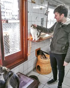 Cat Boat in Amsterdam #poezenboot #cats #catsofinstagram #amsterdam