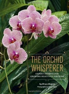 Orchid Care Discover Growing Orchids 101 The Orchid Whisperer: Expert Secrets for Growing Beautiful Orchids Indoor Orchids, Orchids Garden, Roses Garden, Fruit Garden, Garden Urns, Garden Path, Orchid Plant Care, Orchid Plants, Potted Plants