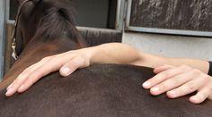 Hur  ställer sig hästägare till att använda sjukgymnastik på sin häst?