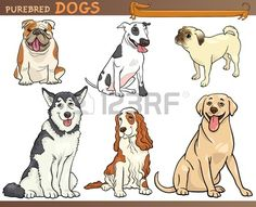 Cartoon Comic Illustration of Canine Breeds or Purebred Dogs Set Stock Vector