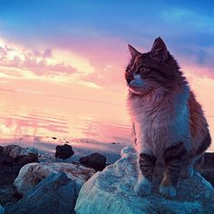 "http://instagramity.com/media/879720782855998708_5932626  #DeluxeFX(@deluxefx) on Instagram: ""Photo Edit: ✨DeluxeFX✨ app --- Photo by  @izkiz - check her awesome feed out #cat #sunset #sea #rocks #sky #cloud."" 
