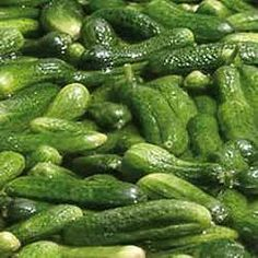 How To Grow Gherkins - for Ooj