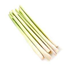korzeń trawy cytrynowej