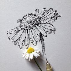 Zeichnungen Mehr