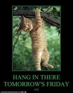 Hang in there quotes quote days of the week thursday friday quotes thursday quotes happy thursday happy thursday quotes Good Morning Happy Thursday, Happy Thursday Quotes, Good Morning Thursday, Thursday Humor, Its Friday Quotes, Good Morning Good Night, Friday Humor, Monday Thursday, Thankful Thursday