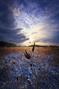 Holding On Print By Phil Koch